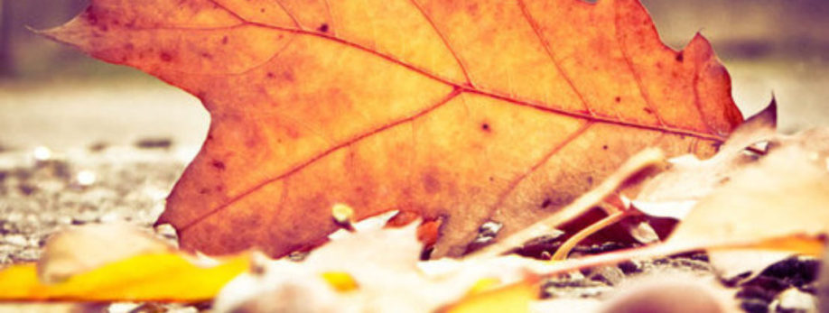 Reserveer nu voor het Herfstweekend op 3 & 4 november.